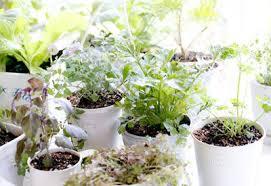 indoor gardening. Winter Garden Indoors Indoor Gardening