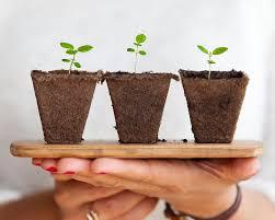 Лучшие <b>удобрения для комнатных растений</b>: чем подкормить ...