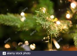 Holiday Branches With Lights Christmas Tree Branches Close Up Decorated With Garland