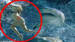 pictures of great white sharks eating people. Brilliant Pictures Great White Sharks Eating People 13 On Pictures Of