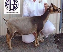 Goat Breeds For Milk Rome Fontanacountryinn Com