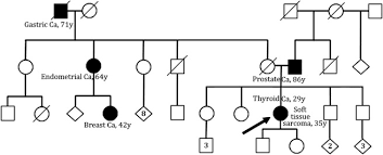 Genomic Profile Of A Li Fraumeni Like Syndrome Patient With