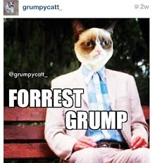 grumpy cat on Pinterest | Funny Grumpy Cats, Funny and So Funny via Relatably.com