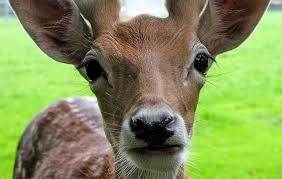 keep deer away from your yard flowers