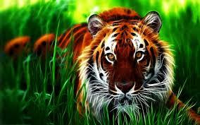 3d animal wallpaper desktop. Modren Animal Tiger Wallpaper 3d For Iphone On Animal Desktop D