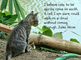 Loss Of A Cat Quotes Gorgeous Coping With The Loss Of A Pet Cat