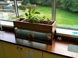 Self Cleaning Fish Tank Garden Aquaponics Aquaponics System Aquaponics And Fish Tanks