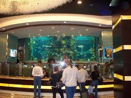 Chart House 70 000 Gallon Fish Tank Picture Of Golden