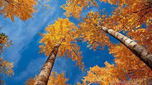 1920x1080 autumn desktop wallpaper hd ...