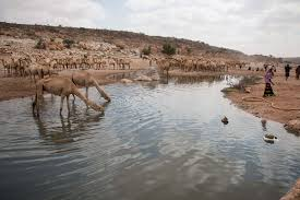 thousands forced to move as drought strikes puntland al jazeera the diminishing stream at dhudo bandar bayla district in eastern puntland it is currently