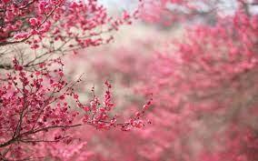 Pink Flower Wallpapers on WallpaperDog