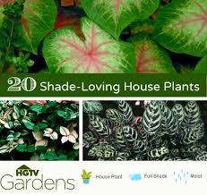 gardens indoor shade house plants container gardening