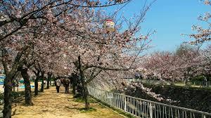 「妙法寺川」の画像検索結果