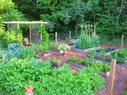 Ornamental Kitchen Garden Creating A Raised Bed Garden