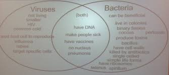 Lytic And Lysogenic Cycle Venn Diagram Mrs Carr And How To Read Codon Chart Part 2