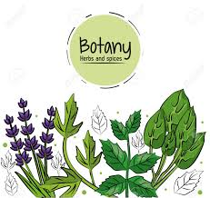 Botany Herbs And Spices Over White Background Vector Illustration