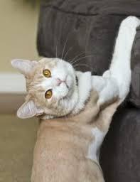 How Keep Cats from Scratching Furniture Fon Jon Pet Care