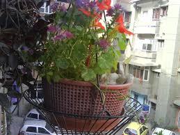 Kitchen Garden In India Grovefloracom Online Gardening Supplies India Buy Flower Bulbs