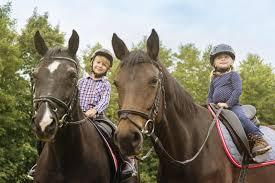 horse insurance quotes horsebox insurance riding school equestrian centre insurance