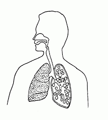 Blank respiratory system diagram