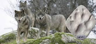 Resultado de imagen de rutas fotos de rihonor centro de lobos ibericos zamora