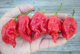 Pepper Chart 2017 Hottest Peppers In The World 2019 Eating On The Edge