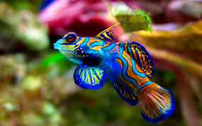 Fish Backgrounds Fish Backgrounds Stunning Fish Wallpaper 8153