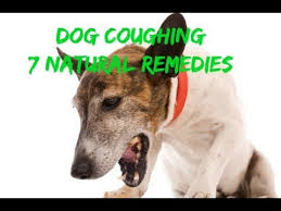 Dog Coughing: How To Quickly Stop It With 7 Natural Remedies - YouTube
