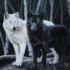 black wolf and white wolf love. Fine White Wolves Wallpaper Called A Gift Inside Black Wolf And White Love L