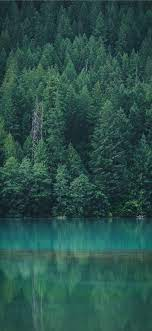 Forest wallpaper, Diablo lake ...