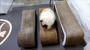 cat scratcher lounge. PetFusion Cat Scratcher Lounge Vs Karma Products Infinity Jumbo - Floppycats YouTube N