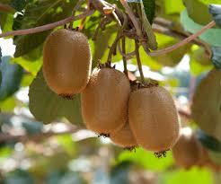 459 Best FruitsCitrus Family Images On Pinterest  Citrus Trees Small Orange Fruit On Tree