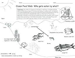 Ocean Food Chain Coloring Pages Printable For Adults Flowers Free