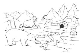 Disegni Da Colorare Il Polo Nord I Petit Fernand