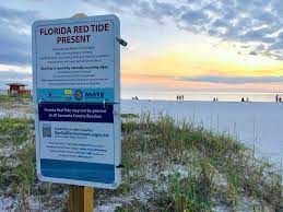 Red tide life cycle hits four stages ...