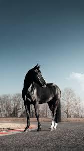 Black Horse Wallpaper (41+ best Black ...