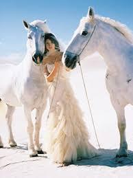 white horses. Beautiful Horses In White Horses