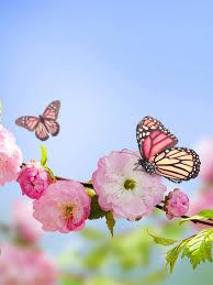 Butterfly Flower Mobile Wallpaper ...