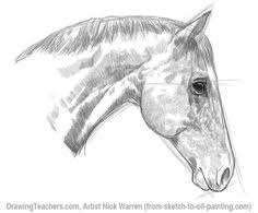 horse face drawing side. Contemporary Horse How To Draw A Tiger Horse Drawings Drawings Of Animal Easy  Pencil Throughout Face Drawing Side R