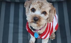diy dog sweater