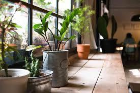 Zimmerpflanzen Im Schlafzimmer Gut Für Klima Wohlbefinden