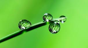Wallpaper ID: 290764 / green grass wet ...