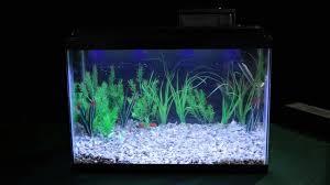 Marineland Aquatic Plant Led Lighting System Review Marineland Hidden Led Light Overview Big Als