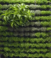 Small Picture Best Of Vertical Garden Design Concept VC60