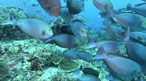 Sea Life Photo Video Light Sealife Video Lights Sample Footage