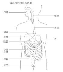 食道胃腸のしくみとはたらきしょくどういちょうのしくみとはたらき