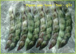 Kitchen Garden Seeds Garden Plants Nursery In Ahmedabad Garden Products Gujarat
