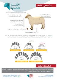 نصائح هامة عند شرائك اضحية العيد