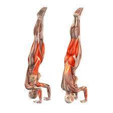 Janu sirsasana is the sanskrit word. Browser Not Supported Yoga Anatomy Yoga Asanas Yoga Muscles