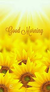 Good Morning Quotes Adorable Sunflower Good Morning Quotes Pictures Photos And Images For